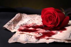 Blut der Rose